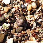 Shells by Rebecca McLean