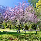 Pink Cherry Blossom Tree by EOS20