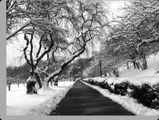 snow scene by etccdb
