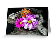 Driftwood Design Greeting Card