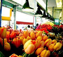 Sunday Morning Tulips by Madison Elliott
