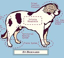 Originaldogco ST BERNARD ANATOMY by Lisa Rotenberg