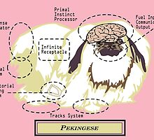 Originaldogco PEKINGESE ANATOMY by Lisa Rotenberg