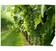 Vineyard View   ^ Poster