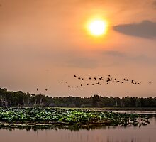 Kakadu Sunset by Russell Charters