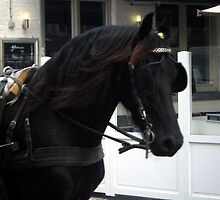 Horses were everywhere in Brugges by Amy Marie Adams