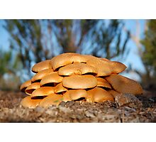 golden fungi Photographic Print