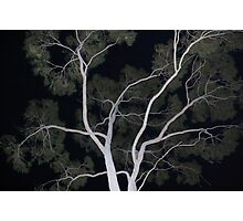 ghost tree Photographic Print