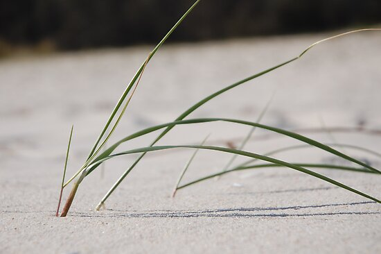 sand grass by LenaMay