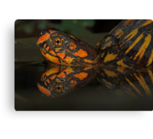 Box Turtle Reflection Canvas Print