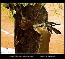 Mhorr Gazelle - Cool Stuff by Maria A. Barnowl