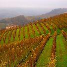 Vineyards of Barolo  by annalisa bianchetti