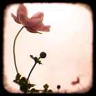 Grandma's Pink Flowers - Japanese Windflowers - Fine Art Viewfinder Photograph by HighlandGhillie