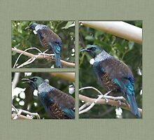 tui in the garden by Brenda Anderson