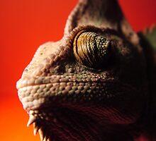 chameleon by sara montour