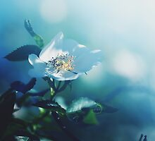 turquoise - like a dream, no 3 by thedannie