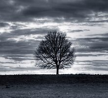Landscape with tree silhouette by Christopher Meder