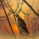 Sharp-Shinned Hawk by billfox256