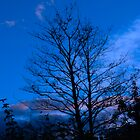 Autum Sky (Blue) by woodgag