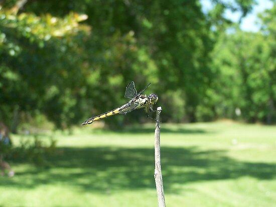 Dragonfly by byuchic