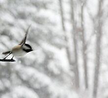 Chickadee Taking Flight in Winter by BrookeRyanPhoto