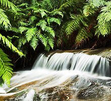 Leura Cascades by Will Barton