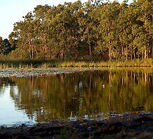 Lake Kurwongbah by Judy Harland