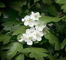 Tiny Blossoms In The Dark Forest by awanderingsoul
