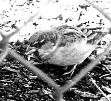 Bird Through Fence by Tommy Seibold