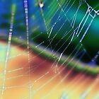 rainbow web by justjulie