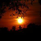 orange sunset by Jennifer Mayo