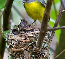 Robin's Nest by Chris Annable