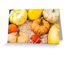 Variety of colorful autumn pumpkins on the market Greeting Card