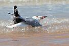 Silver Gull ~ Bath Time  by Robert Elliott