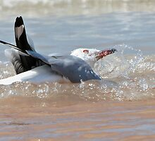 Silver Gull ~ Bath Time  by Robert Elliott