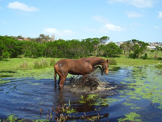 Water horse by Sharna Wood