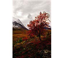 Intense Autumn Photographic Print