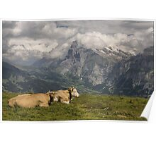 Cows with a View Poster