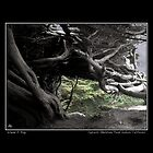 Cypress Skeleton Fine Art Poster by Wayne King