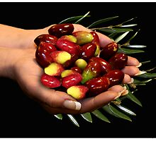 Hand of Olives by Kath Gillies