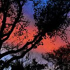 Sunset Colours by Susan Werby