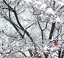 Birdie in a Tree (Central Park) by Anne McGrath