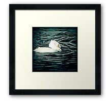 Water Doves Framed Print