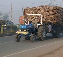 Got Sugar Cane? by Balraj Singh