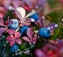 blueberry in the autumn. by Elvar Eyberg Halldórsson