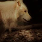 White Wolf by Ian Phares