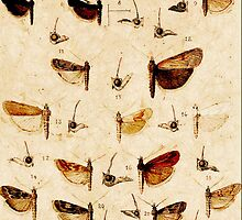 25 Moths by PictureNZ