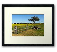 Canola Framed Print