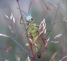 Grass Hopper by iammeasiam