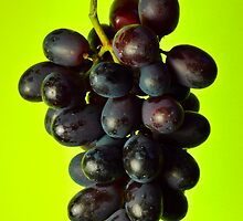 Black Grapes by Karin  Hildebrand Lau